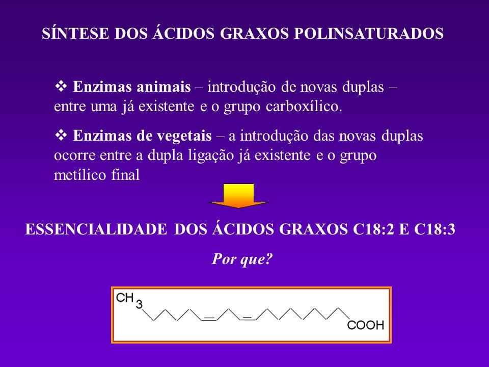 SÍNTESE DOS ÁCIDOS GRAXOS POLINSATURADOS Enzimas animais – introdução de novas duplas – entre uma já existente e o grupo carboxílico. Enzimas de veget