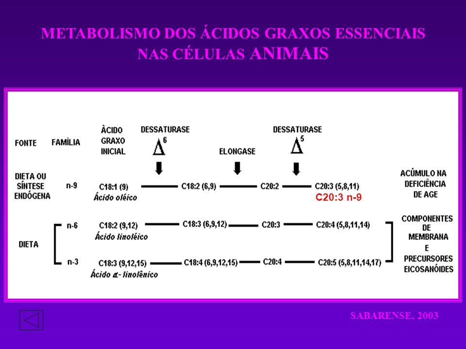 METABOLISMO DOS ÁCIDOS GRAXOS ESSENCIAIS NAS CÉLULAS ANIMAIS C20:3 n-9 SABARENSE, 2003