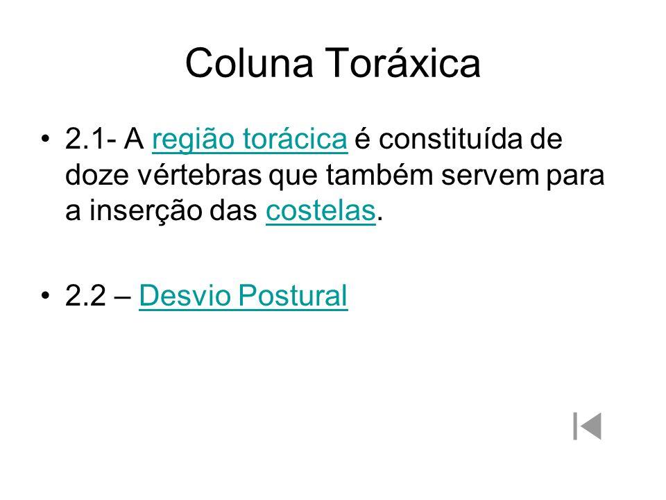 Coluna Toráxica 2.1- A região torácica é constituída de doze vértebras que também servem para a inserção das costelas.região torácicacostelas 2.2 – De