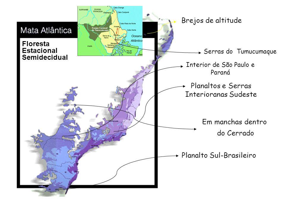 Brejos de altitude Serras do Tumucumaque Interior de São Paulo e Paraná Planaltos e Serras Interioranas Sudeste Em manchas dentro do Cerrado Planalto