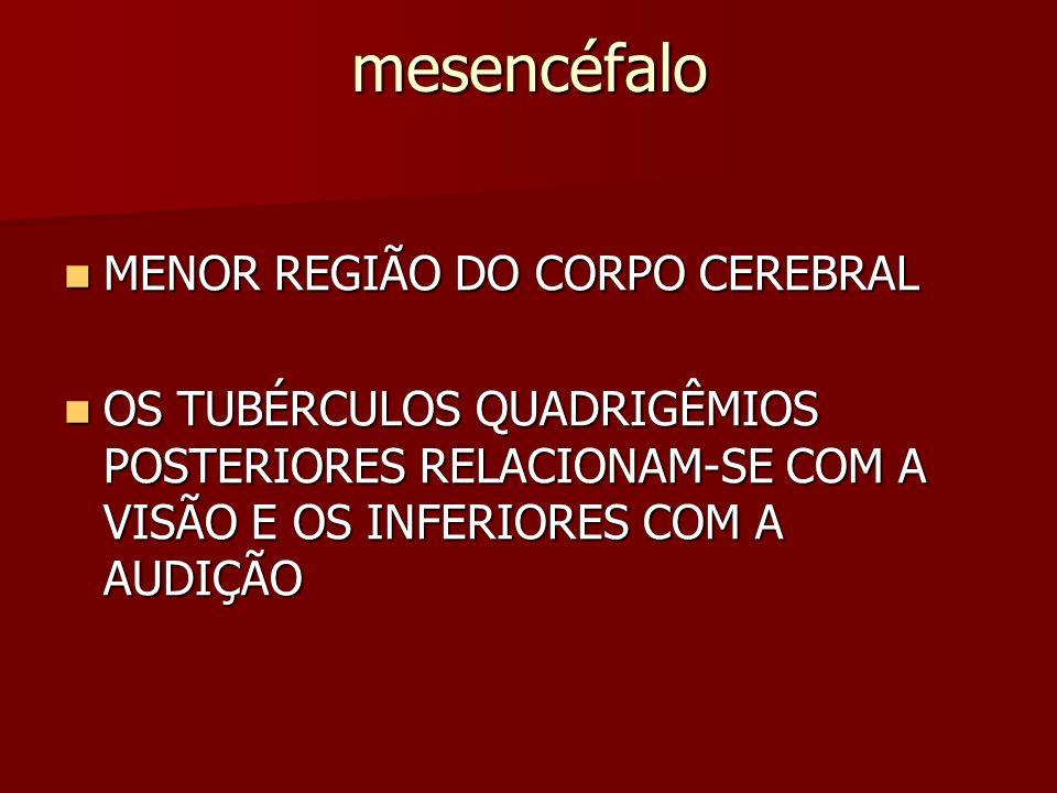 mesencéfalo MENOR REGIÃO DO CORPO CEREBRAL MENOR REGIÃO DO CORPO CEREBRAL OS TUBÉRCULOS QUADRIGÊMIOS POSTERIORES RELACIONAM-SE COM A VISÃO E OS INFERIORES COM A AUDIÇÃO OS TUBÉRCULOS QUADRIGÊMIOS POSTERIORES RELACIONAM-SE COM A VISÃO E OS INFERIORES COM A AUDIÇÃO