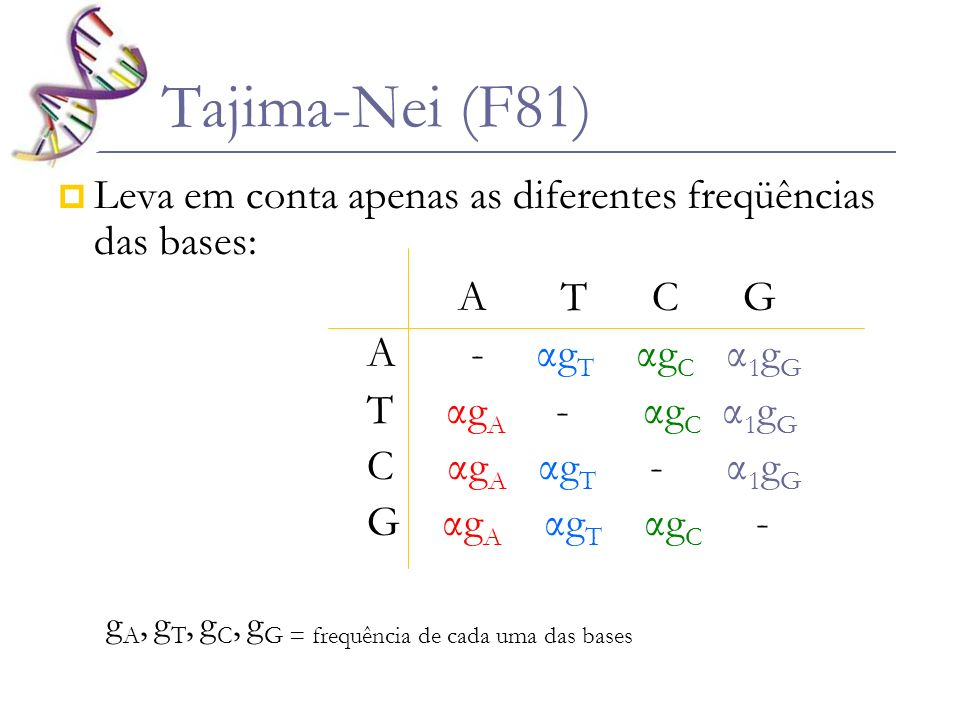 Tajima-Nei (F81) Leva em conta apenas as diferentes freqüências das bases: A T C G A - αg T αg C α 1 g G T αg A - αg C α 1 g G C αg A αg T - α 1 g G G