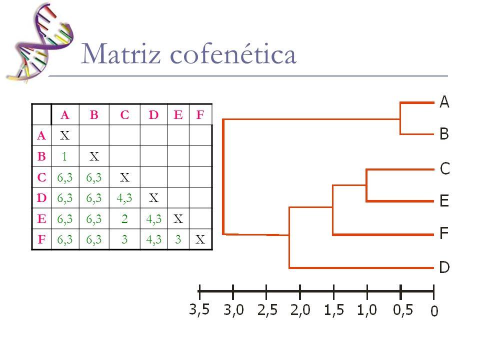 Matriz cofenética ABCDEF AX B1X C6,3 X D 4,3X E6,3 24,3X F6,3 34,33X