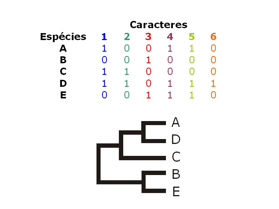 A D C B E 1
