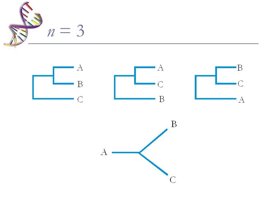 n = 3