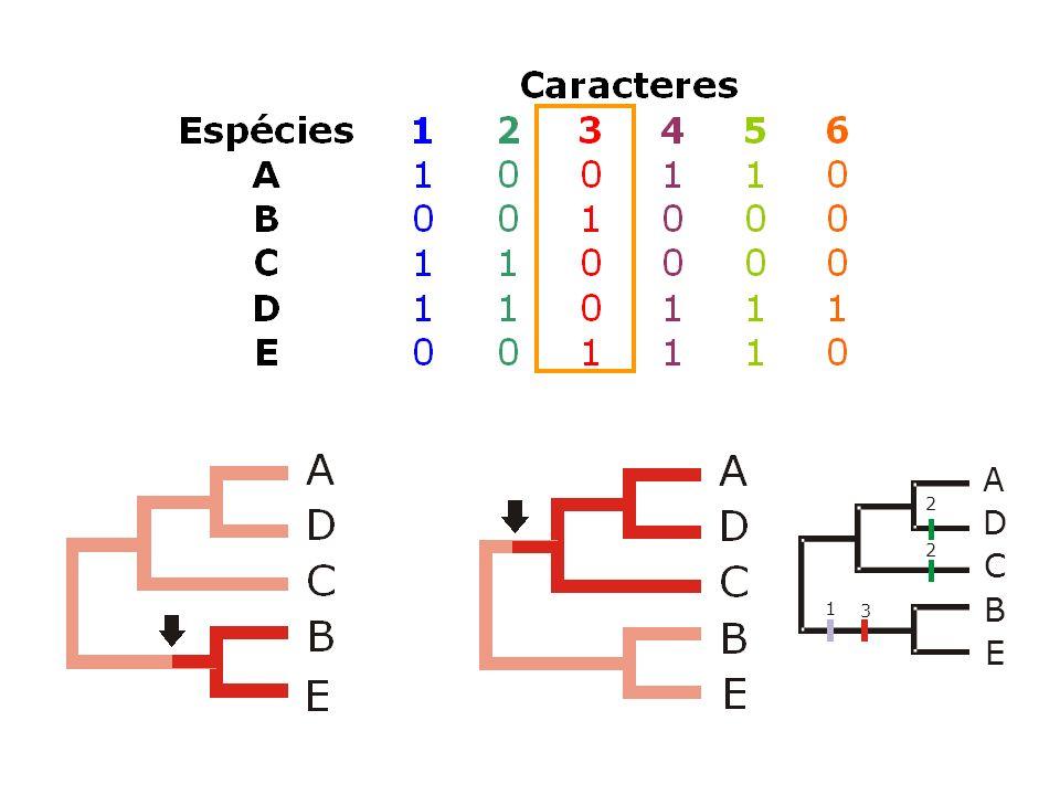 Homoplasias Substituições reversas ou paralelas (dois resíduos de aminoácido ou nucleotídeo são idênticos em duas OTUS, mas isso não se deve à ancestralidade comum).
