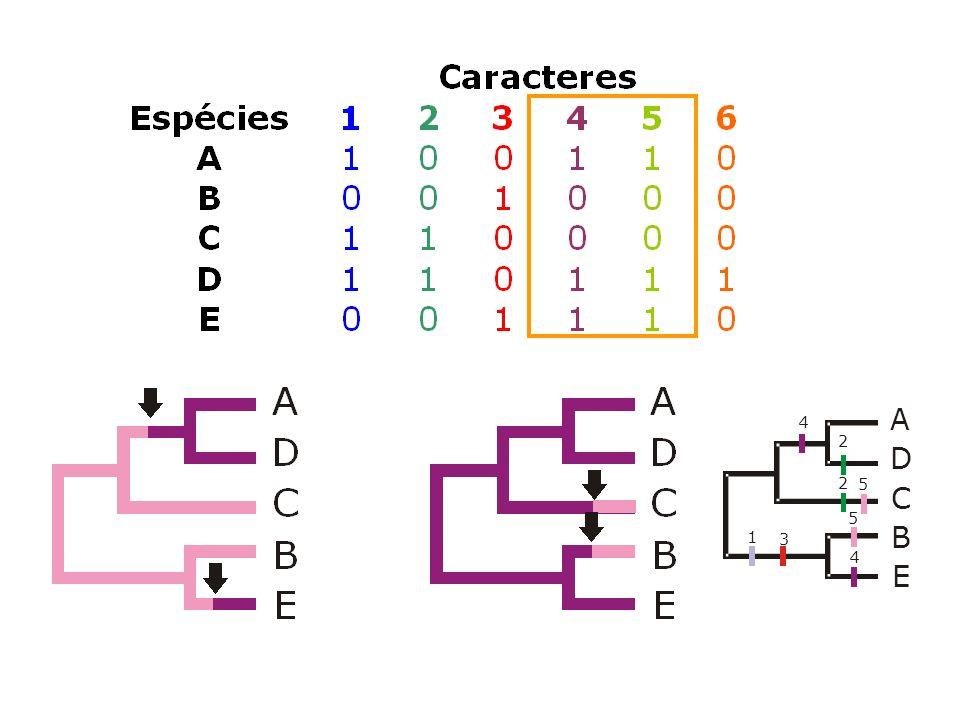 A D C B E 2 2 4 3 1 4 5 5