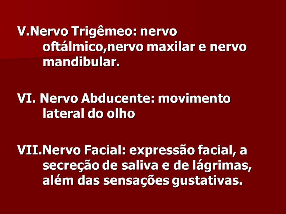 V.Nervo Trigêmeo: nervo oftálmico,nervo maxilar e nervo mandibular. VI. Nervo Abducente: movimento lateral do olho VII.Nervo Facial: expressão facial,