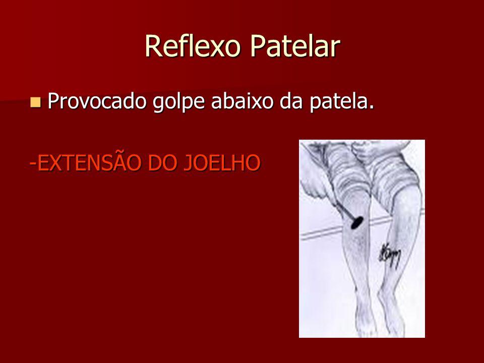 Reflexo Patelar Provocado golpe abaixo da patela.Provocado golpe abaixo da patela.