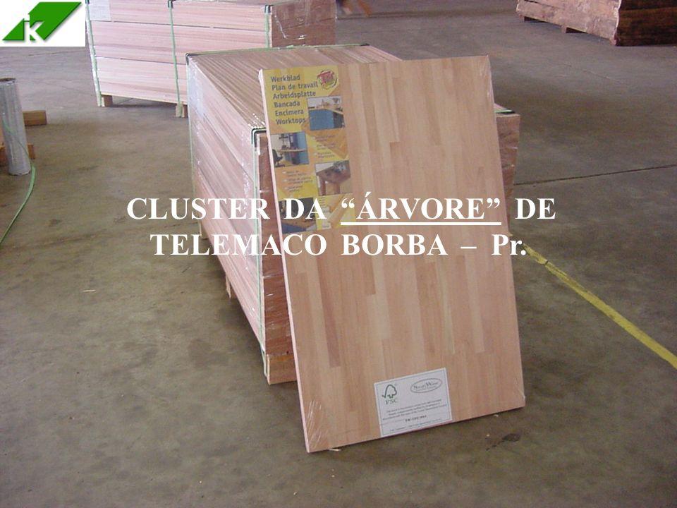 31 CLUSTER DA ÁRVORE DE TELEMACO BORBA – Pr.