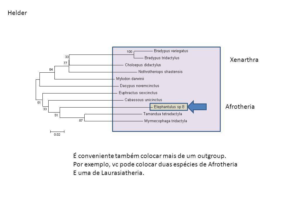 Helder Xenarthra Afrotheria É conveniente também colocar mais de um outgroup. Por exemplo, vc pode colocar duas espécies de Afrotheria E uma de Lauras