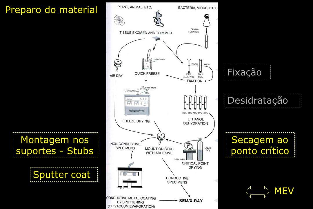 Preparo do material Fixação Desidratação Secagem ao ponto crítico Montagem nos suportes - Stubs Sputter coat MEV