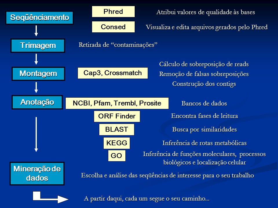 Seqüênciamento Trimagem Montagem Anotação Mineração de dados Phred Retirada de contaminações Cap3, Crossmatch Inferência de rotas metabólicas Inferênc