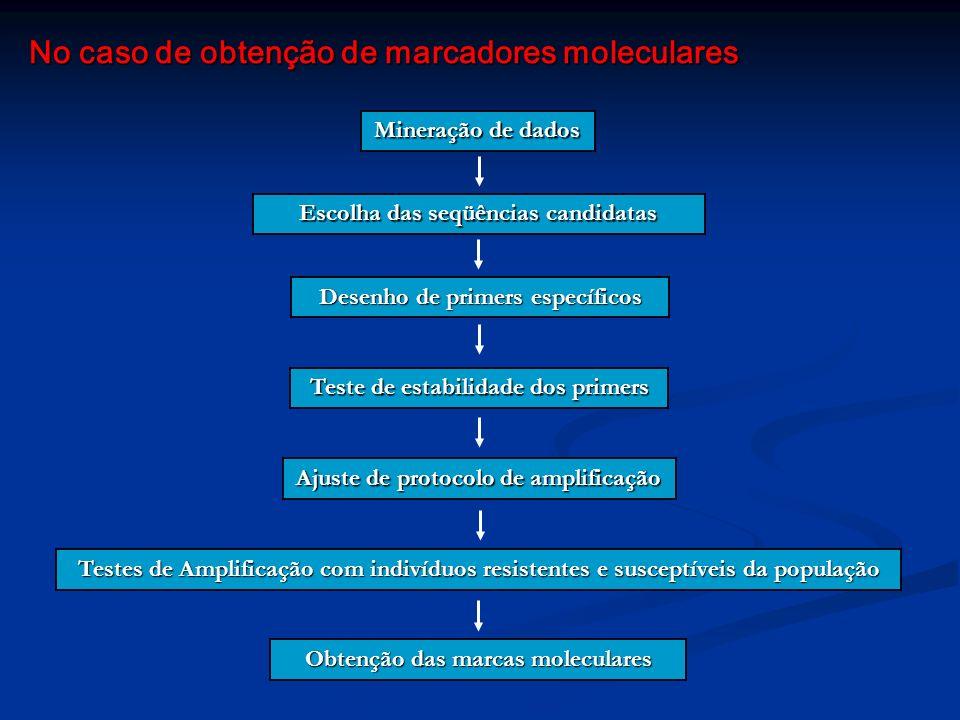 No caso de obtenção de marcadores moleculares Mineração de dados Escolha das seqüências candidatas Desenho de primers específicos Teste de estabilidad