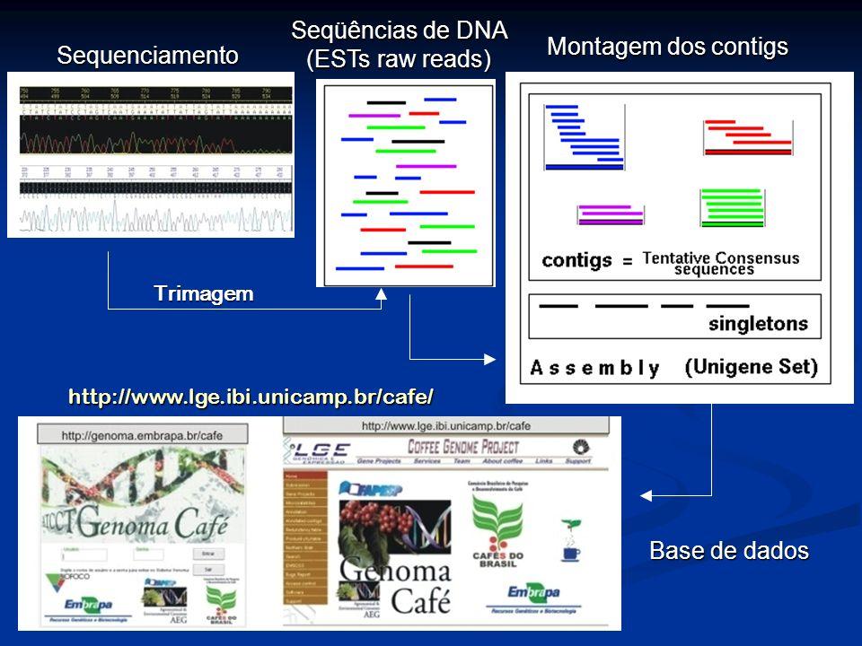 Coleta de seqüências em bancos específicos Pesquisa em bancos de dados públicos Bancos de dados mencionados nas literaturas Entrez Gene Análise de expressão diferencial Digital Differential Display http://www.ncbi.nlm.nih.gov/UniGene/ddd.cgi?ORG=Les Biblioteca subtrativa Northern Eletrônico http://www.ncbi.nlm.nih.gov/entrez/query.fcgi?db=gene http://www.sgn.cornell.edu/ Mineração de dados Estratégias Recursos Plataformas específicas de análises http://www.lge.ibi.unicamp.br/cafe/Outras Vai depender do seu trabalho !
