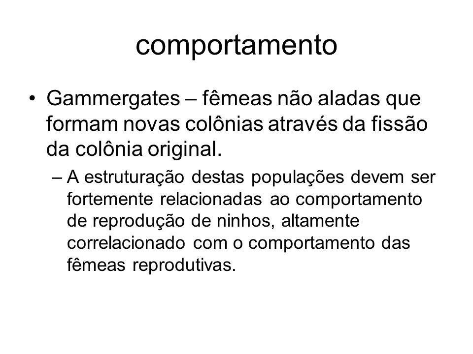 comportamento Gammergates – fêmeas não aladas que formam novas colônias através da fissão da colônia original. –A estruturação destas populações devem