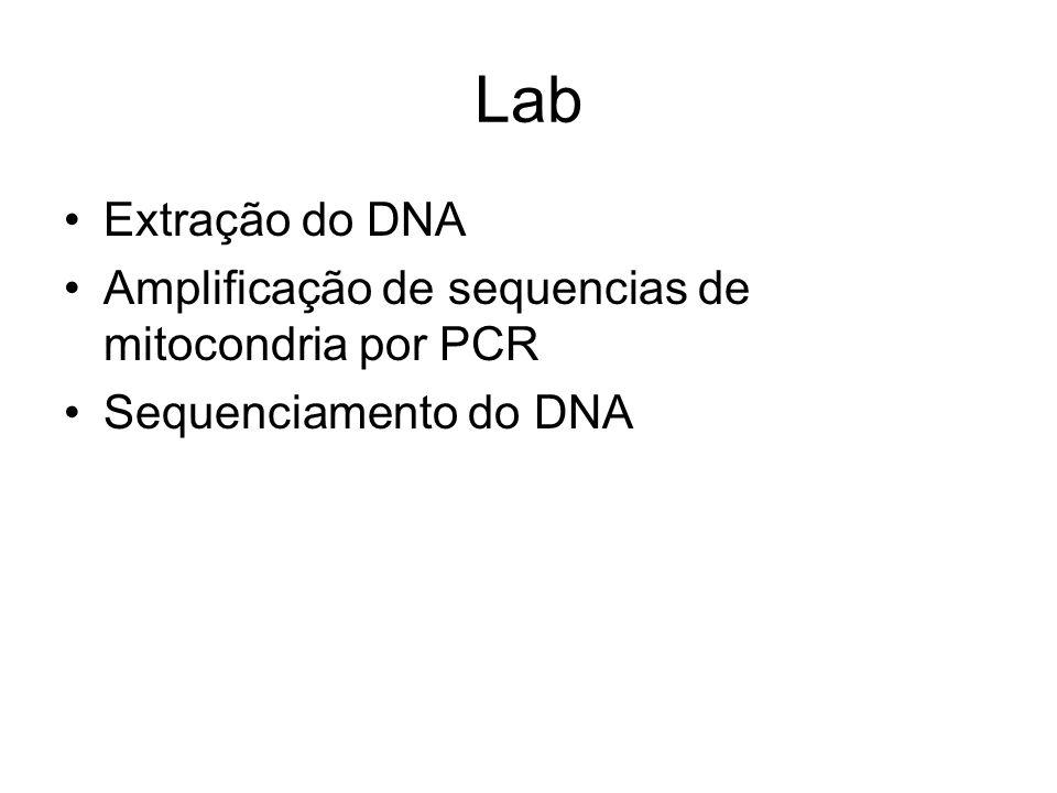 Lab Extração do DNA Amplificação de sequencias de mitocondria por PCR Sequenciamento do DNA