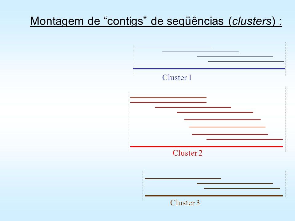 Estratégias de bioinformática para montagem (assembly) dos contigs VNTI ContigExpress (http://www.invitrogen.com/content.cfm?pageid=10209) TIGR DNAMAN SeqMan CAP3 - Web Contig Assembly Program (http://pbil.univ-lyon1.fr/cap3.php) Phred/Phrap/Consed