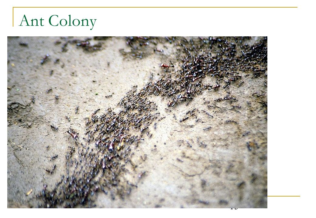 15 Ant Colony