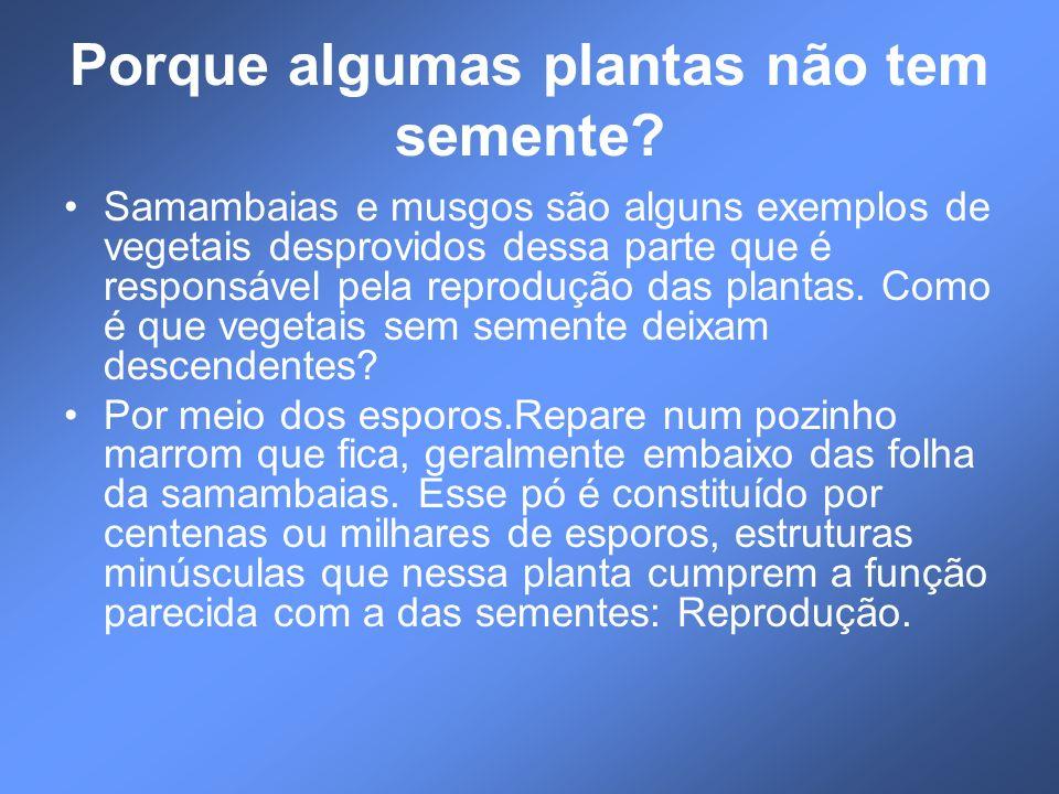 Porque algumas plantas não tem semente? Samambaias e musgos são alguns exemplos de vegetais desprovidos dessa parte que é responsável pela reprodução