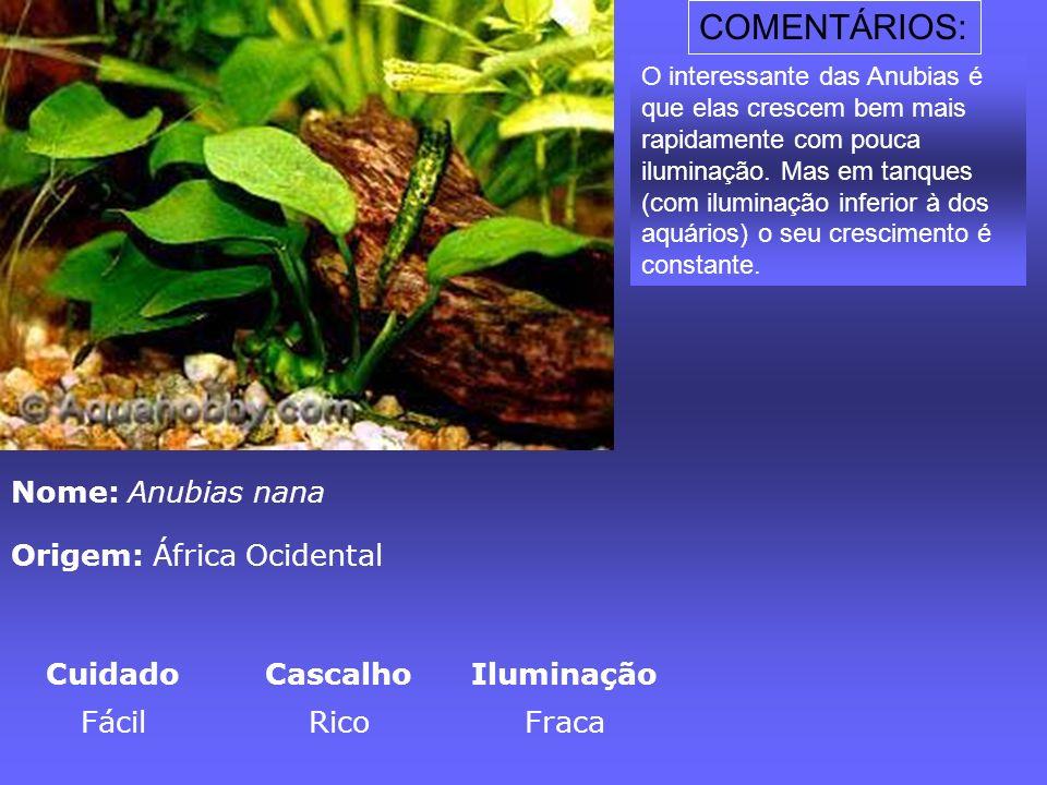 Nome: Anubias nana Origem: África Ocidental CuidadoCascalhoIluminação FácilRicoFraca O interessante das Anubias é que elas crescem bem mais rapidament