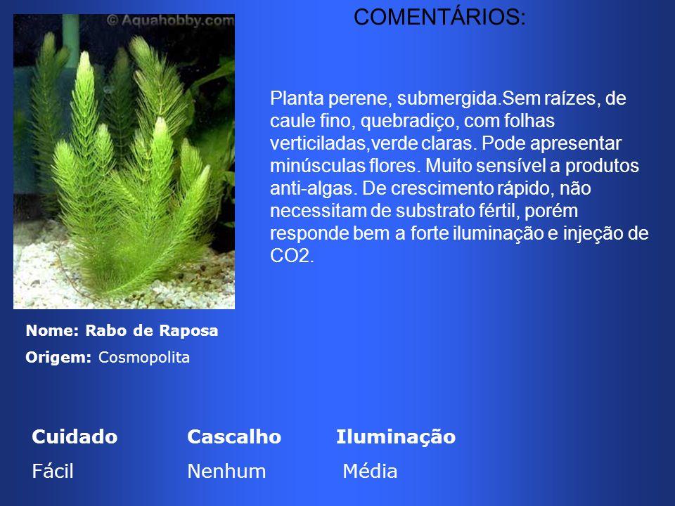 Nome: Rabo de Raposa Origem: Cosmopolita Cuidado CascalhoIluminação Fácil Nenhum Média Planta perene, submergida.Sem raízes, de caule fino, quebradiço