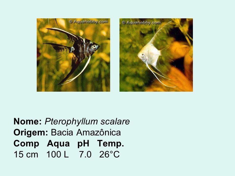 PAULISTINHA O paulistinha é um excelente peixe comunitário e é um dos melhores peixes para iniciantes.