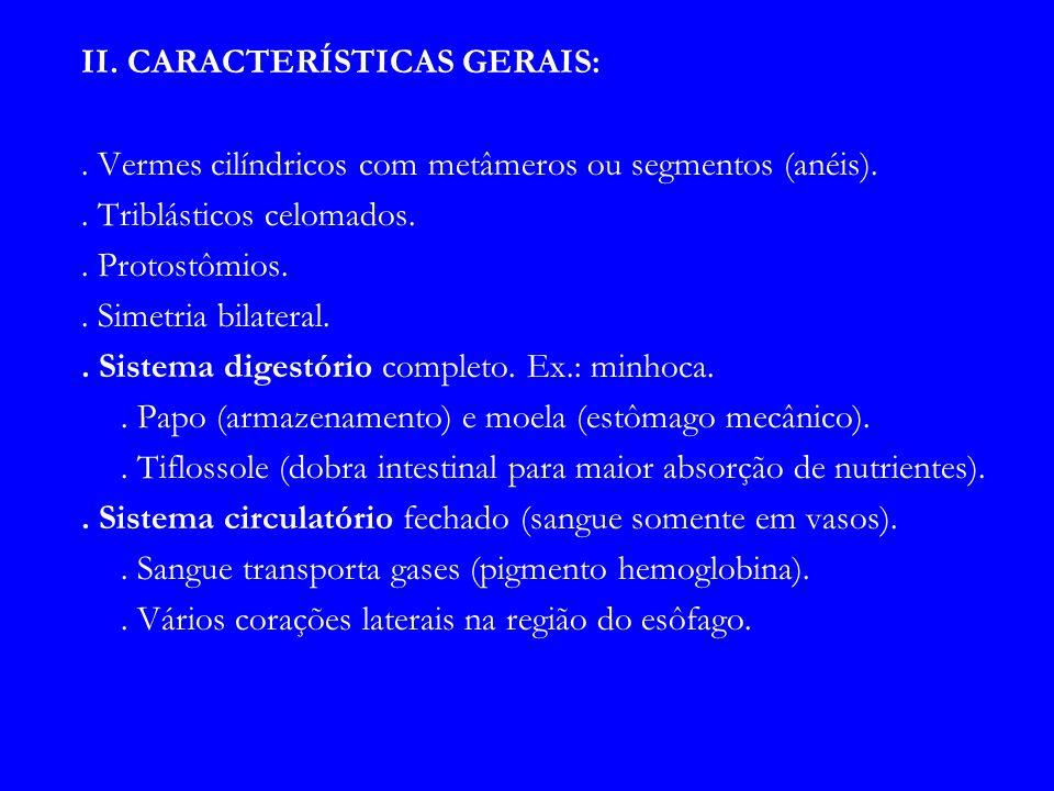 II. CARACTERÍSTICAS GERAIS:. Vermes cilíndricos com metâmeros ou segmentos (anéis).. Triblásticos celomados.. Protostômios.. Simetria bilateral.. Sist