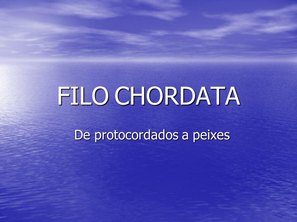 FILO CHORDATA De protocordados a peixes