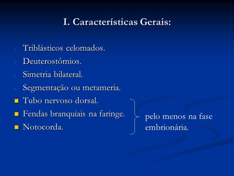 I. Características Gerais: - Triblásticos celomados. - Deuterostômios. - Simetria bilateral. - Segmentação ou metameria. Tubo nervoso dorsal. Tubo ner