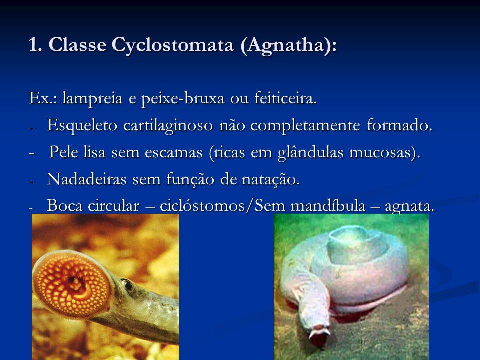 2.Superclasse Pisces: - Corpo fusiforme e nadadeiras com função natatória.