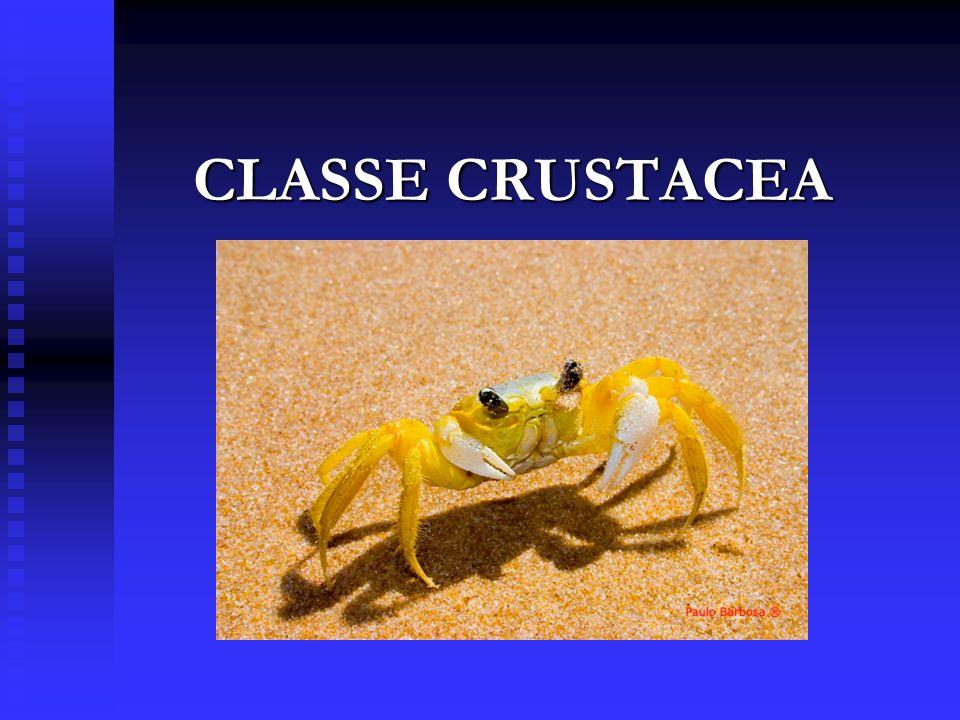 CLASSE CRUSTACEA