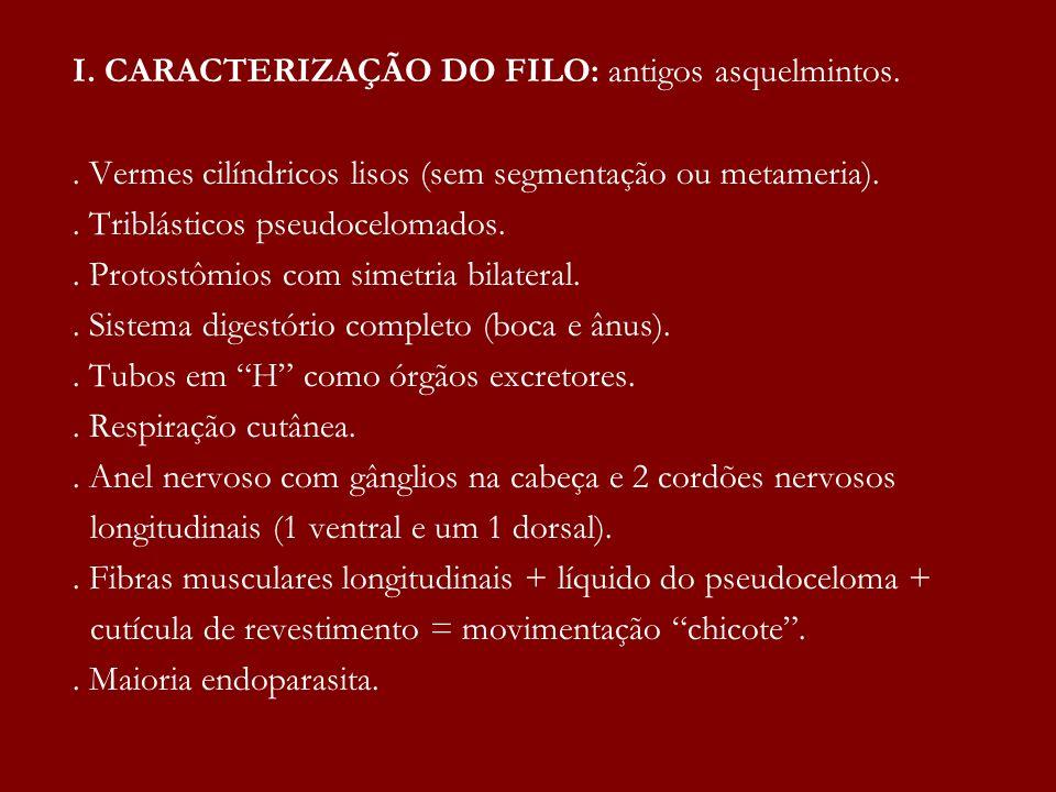 II.ENDOPARASITAS: 1. ÁSCARIS:. Lombriga Ascaris lumbricoides (agente causador ou etiológico)..