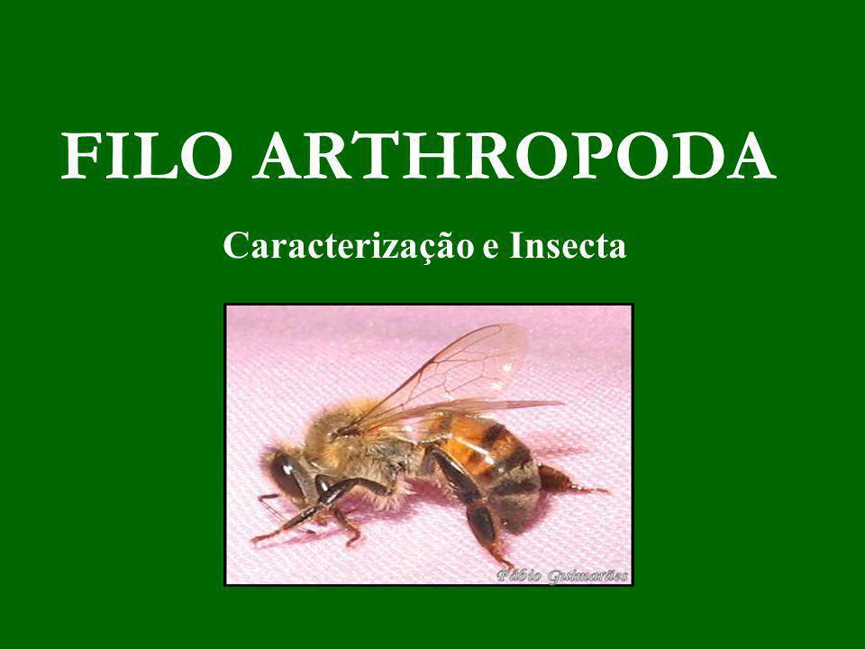 FILO ARTHROPODA Caracterização e Insecta