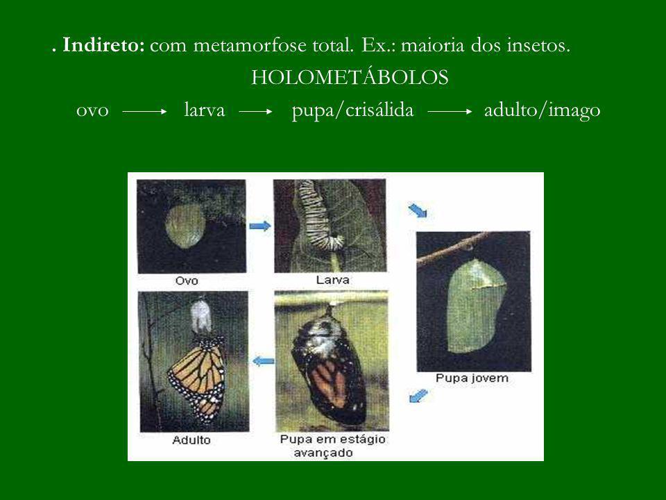 . Indireto: com metamorfose total. Ex.: maioria dos insetos. HOLOMETÁBOLOS ovo larva pupa/crisálida adulto/imago