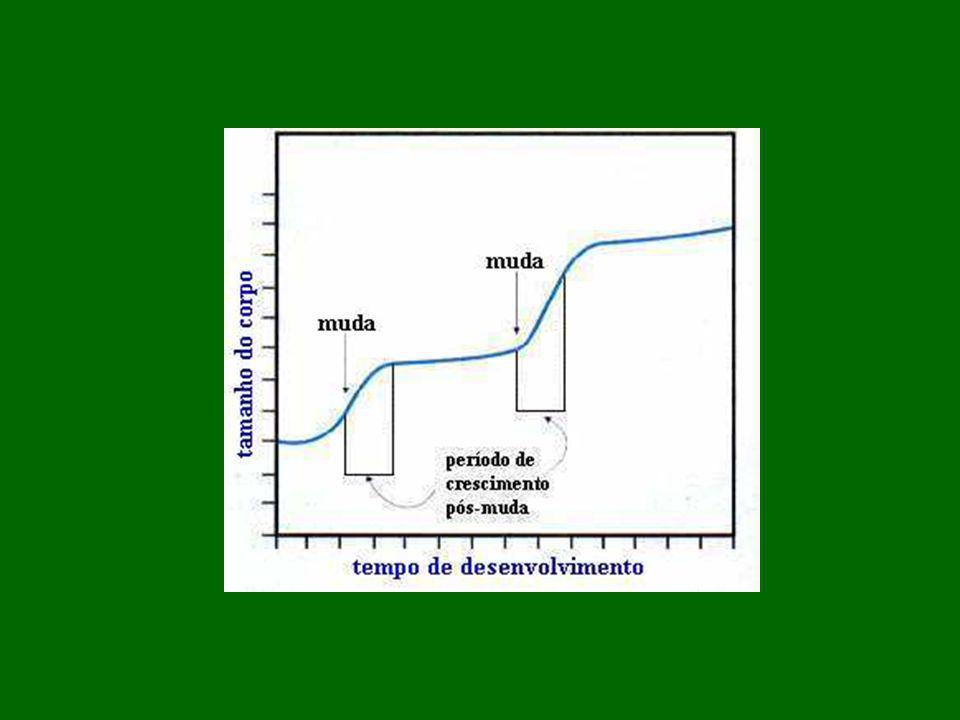 Sistema Respiratório:.Respiração traqueal – sem a participação do sist.