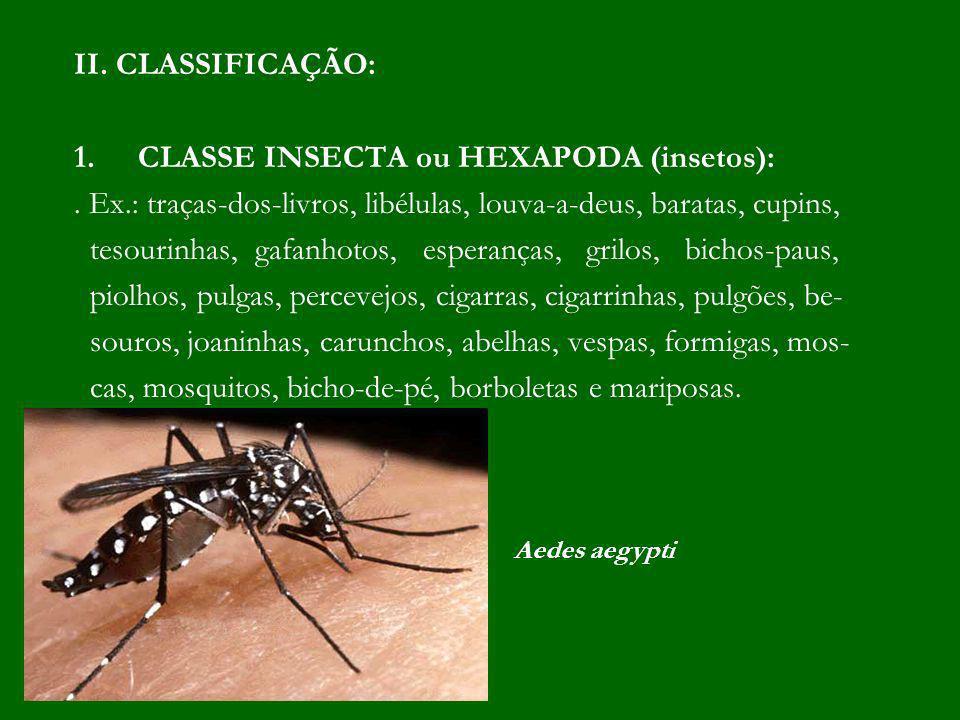 II. CLASSIFICAÇÃO: 1.CLASSE INSECTA ou HEXAPODA (insetos):. Ex.: traças-dos-livros, libélulas, louva-a-deus, baratas, cupins, tesourinhas, gafanhotos,
