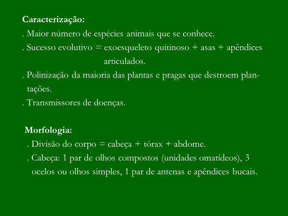 Caracterização:. Maior número de espécies animais que se conhece.. Sucesso evolutivo = exoesqueleto quitinoso + asas + apêndices articulados.. Poliniz