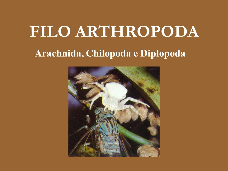 FILO ARTHROPODA Arachnida, Chilopoda e Diplopoda