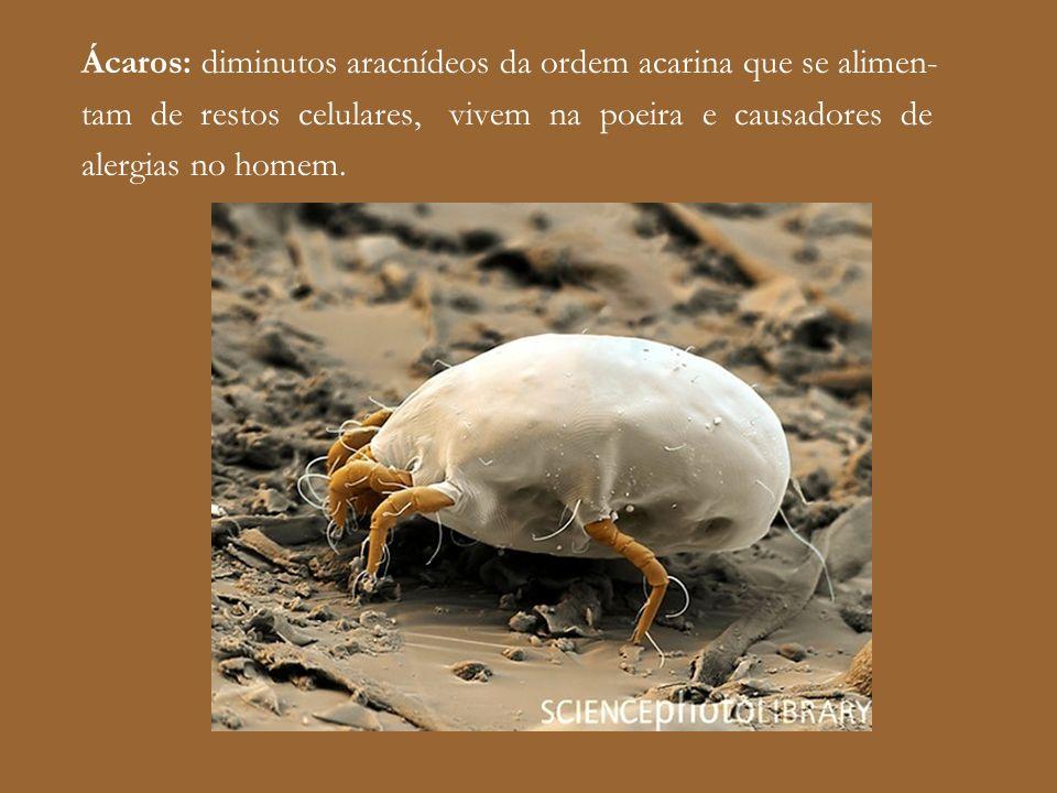 Ácaros: diminutos aracnídeos da ordem acarina que se alimen- tam de restos celulares, vivem na poeira e causadores de alergias no homem.