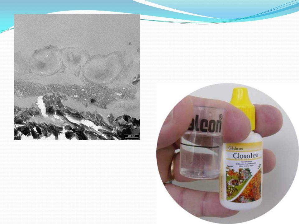 Nossa água contém por motivos higiênicos pequenas quantidades de cloro (elemento químico, tóxico para alguns seres e essencial para a vida de outros,
