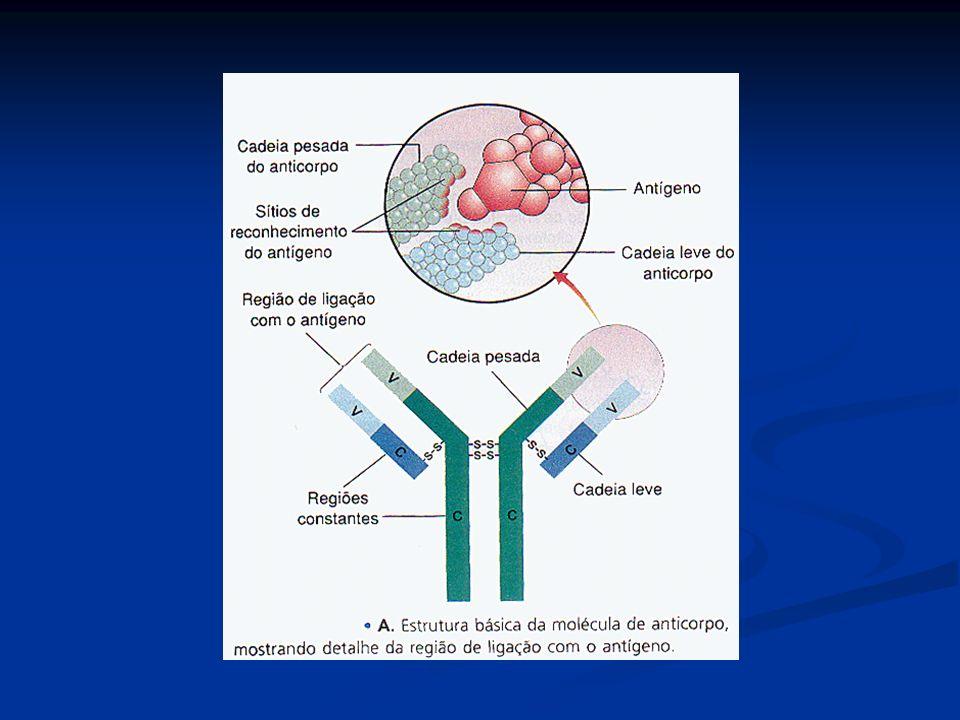 Representação esquemática da molécula de anticorpo – imunoglobulina.
