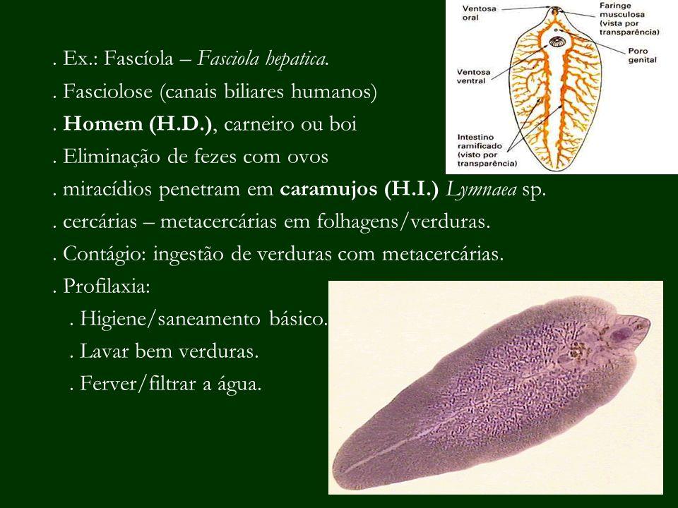 . Ex.: Fascíola – Fasciola hepatica.. Fasciolose (canais biliares humanos). Homem (H.D.), carneiro ou boi. Eliminação de fezes com ovos. miracídios pe