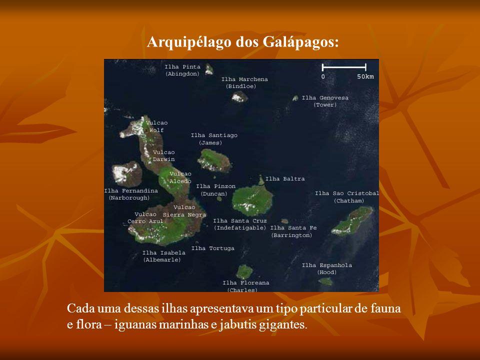 Arquipélago dos Galápagos: Cada uma dessas ilhas apresentava um tipo particular de fauna e flora – iguanas marinhas e jabutis gigantes.