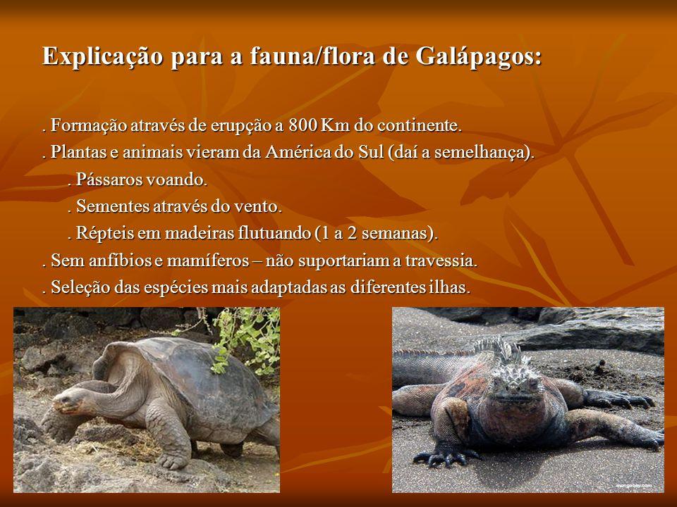 Explicação para a fauna/flora de Galápagos:. Formação através de erupção a 800 Km do continente.. Plantas e animais vieram da América do Sul (daí a se