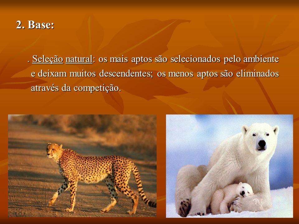2. Base:. Seleção natural: os mais aptos são selecionados pelo ambiente e deixam muitos descendentes; os menos aptos são eliminados e deixam muitos de