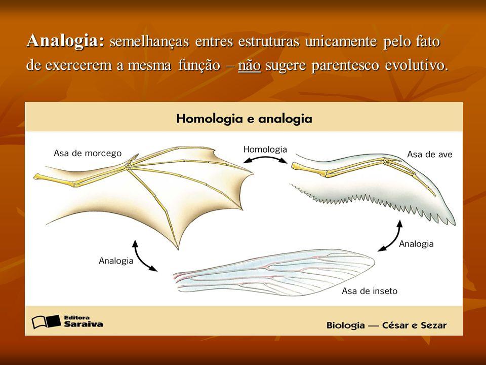 Analogia: semelhanças entres estruturas unicamente pelo fato de exercerem a mesma função – não sugere parentesco evolutivo.