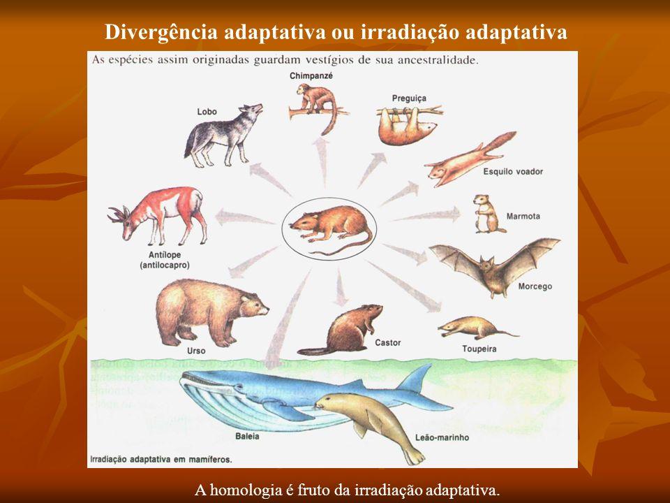 Divergência adaptativa ou irradiação adaptativa A homologia é fruto da irradiação adaptativa.