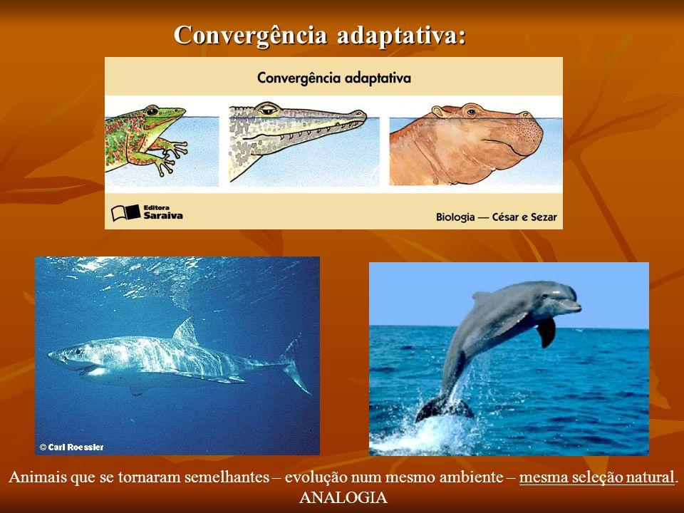 Convergência adaptativa: Animais que se tornaram semelhantes – evolução num mesmo ambiente – mesma seleção natural. ANALOGIA