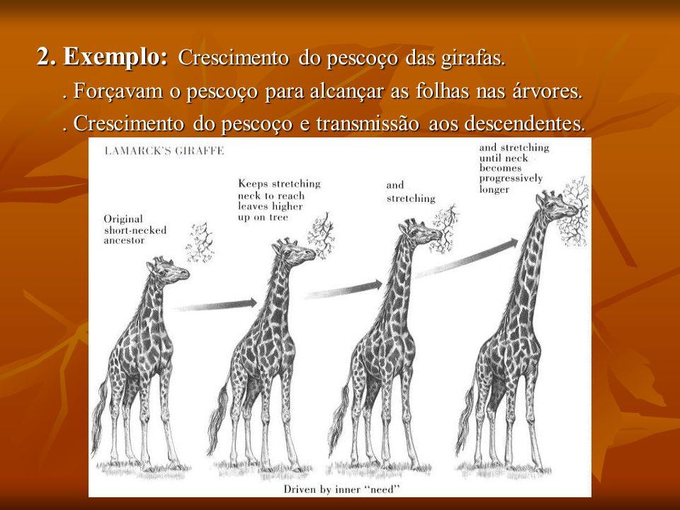 2. Exemplo: Crescimento do pescoço das girafas.. Forçavam o pescoço para alcançar as folhas nas árvores.. Crescimento do pescoço e transmissão aos des